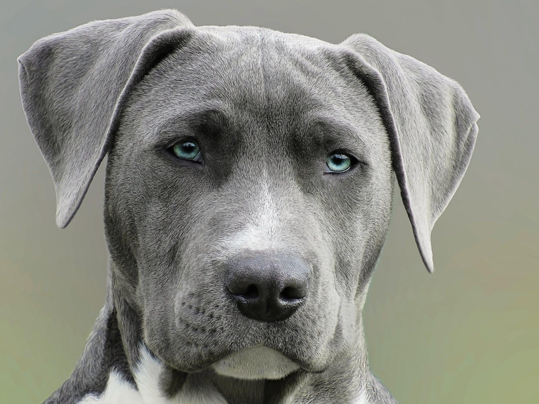 Vous aimeriez avoir un chien. Il doit vous convenir à vous, mais aussi à votre domicile.